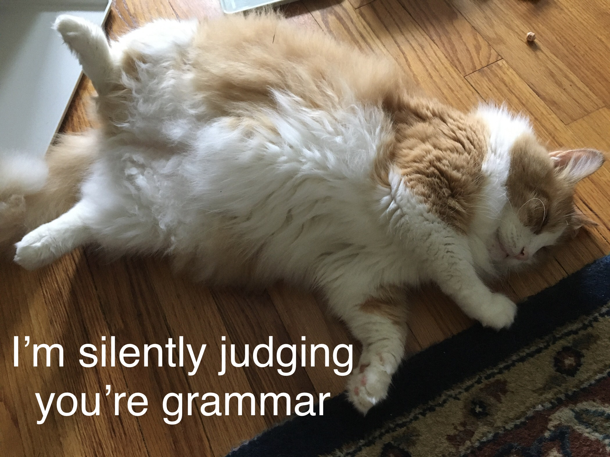 """Image of cat asleep with text """"I'm silently judging you're grammar"""""""